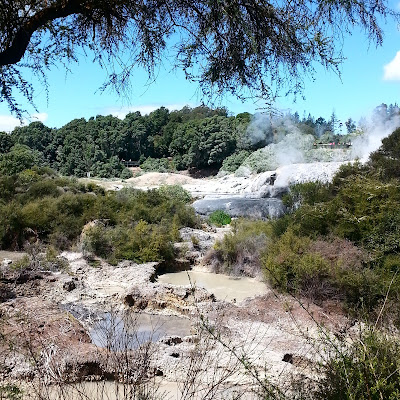 Thermal area in New Zealand bush.