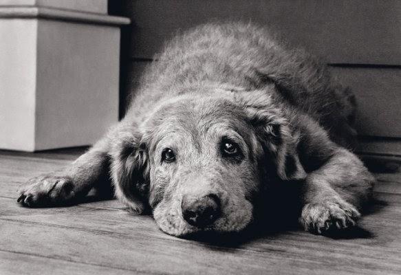Despedida De Um Cão: Clínica Veterinária São Francisco De Assis (SFA): A