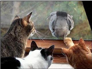gato-curiosidad-proteccion-peligro