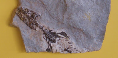 Fossils of lizards, other critters, and other discoveries are being troublesome to evolutionists.