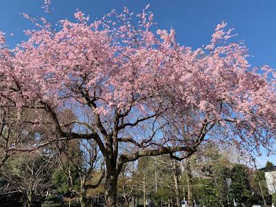 月次祭(平成31年4月1日)