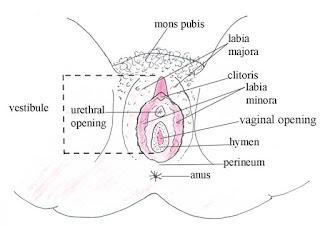 Sexo anal engravida?