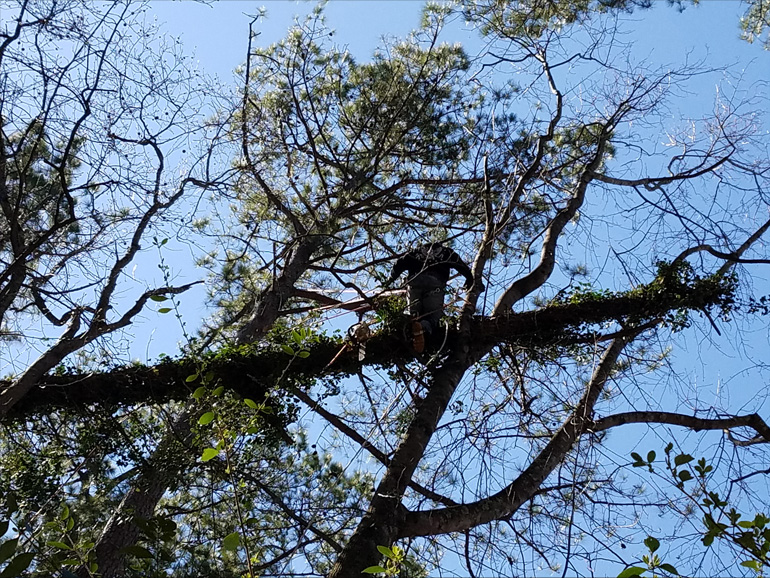 tree removal in johns creek
