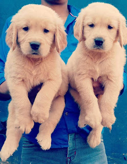 dogs for sale in ahmedabad
