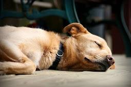 Dokter ini Mampu Hidupkan Anjing Setelah 10 Menit  Dinyatakan Mati
