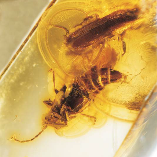 By Hookup Fossils Of Pollen And Beetles