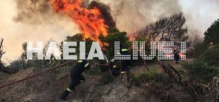 Ηλεία: 100 στρέμματα στάχτη στο Βελανίδι
