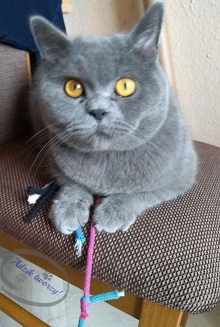 Adzik tworzy - DIY zabawka dla kota ze sznurków