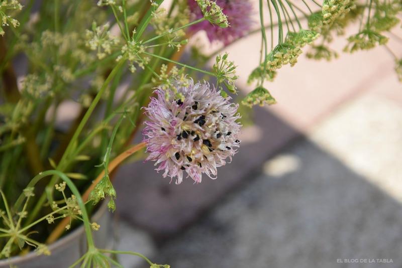 flor de cebollino (allium schoenoprasum) con semillas