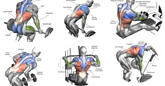 Exercises For A Massive Back - Training For Size -6402