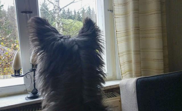 koiravalokuvaus-lomalla-koiran-kanssa