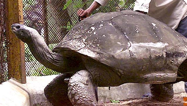 Adwaita the Tortoise (1750-2006)