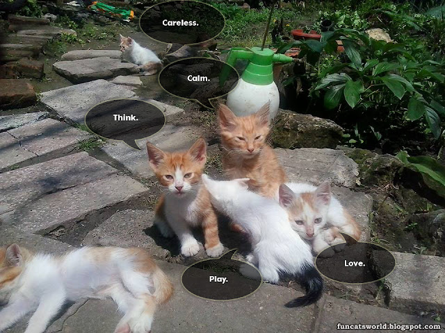 Cats' Emotions