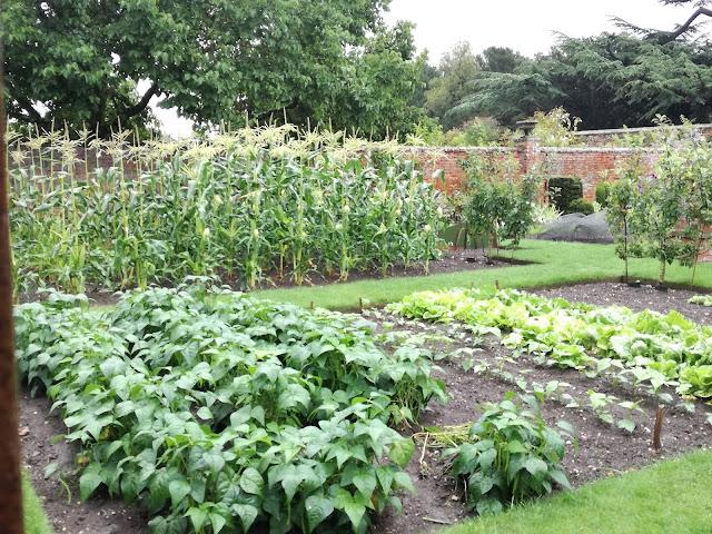angielski ogród kuchenny, ogród warzywny