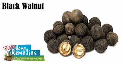 Home Treatments For Intestinal Parasites (worms) In Dogs: Black Walnut