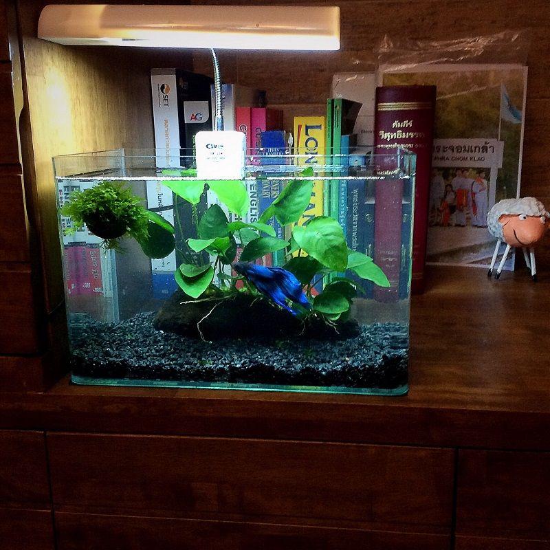 Image Most Noticeable Do Betta Fish Need Rocks