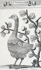 Rodrigues solitarius ve dodo kuşları benzerliği