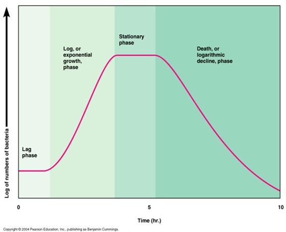 Kurva Berat Badan Bayi WHO sebagai Acuan Pertumbuhan