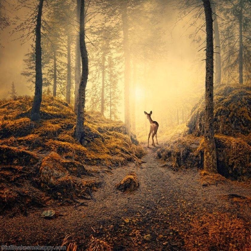 Marvelous woods