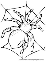 insect and spider coloring pages