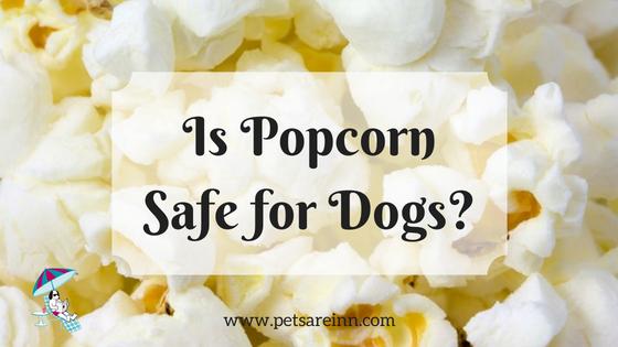 popcorn dog safe