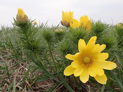 Miłek wiosenny, rezerwat Skorocice, rezerwat Przęślin