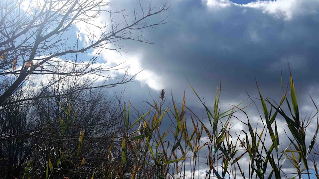 Autumn Wind Thesis