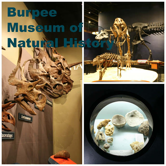 Burpee Museum of Natural History in Rockford, IL