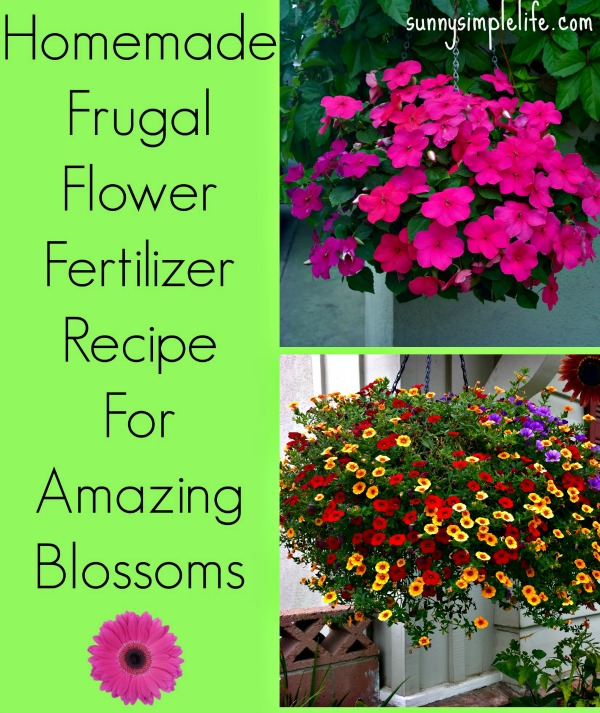Homemade Flower Fertilizer, diy flower food, frugal homemade plant fertilizer