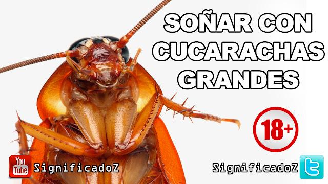 Soñar con Cucarachas Grandes ¿Que Significa?