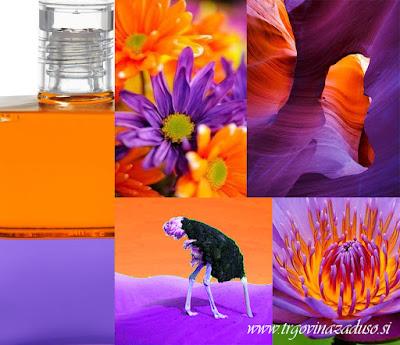 http://trgovinazaduso.si/163,steklenicka-79-%E2%80%93-nojeva-steklenicka.html