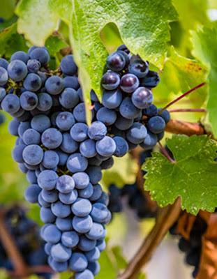 enoturystyka, wino podróże, Argentyna, Kalifornia,