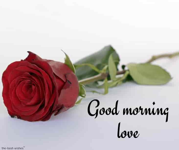good morning love with red rose