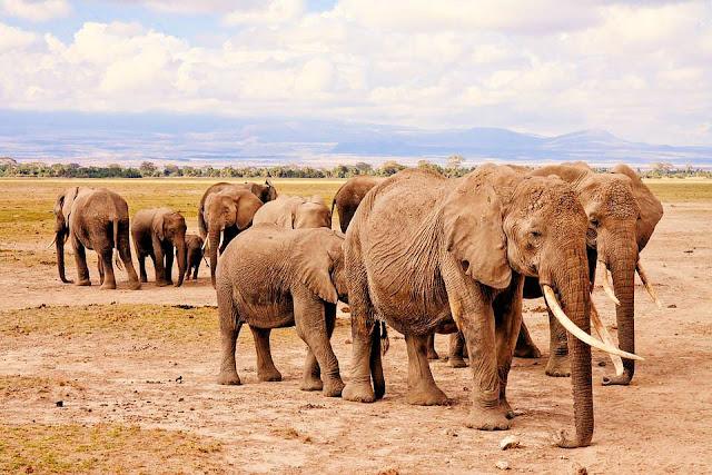 Zugreise mit Safari im Chobe National Park