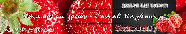 Саженцы ремонтантной клубники в Украине, 0985674877, 0957351986, Strawberry