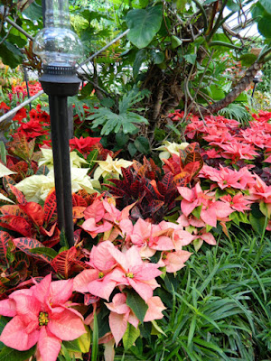 Allan Gardens Conservatory Christmas Flower Show 2015 poinsettias crotons by garden muses-not another Toronto gardening blog