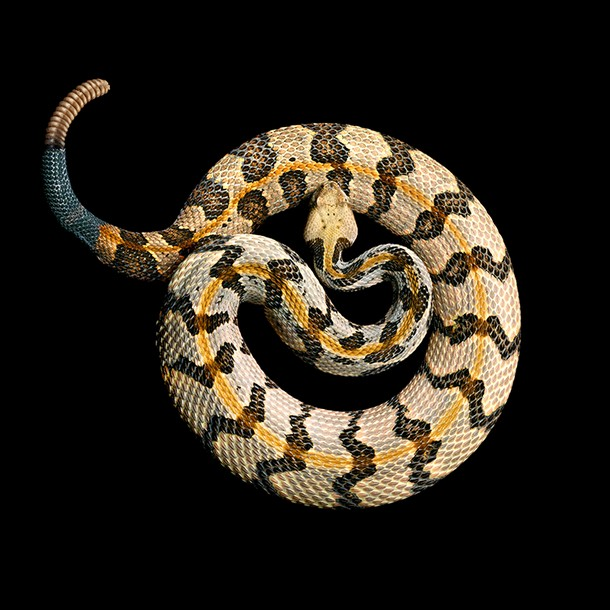 Most Beautiful Snakes