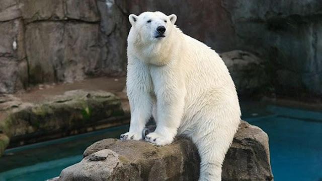 História do Zoológico Lincoln Park Zoo