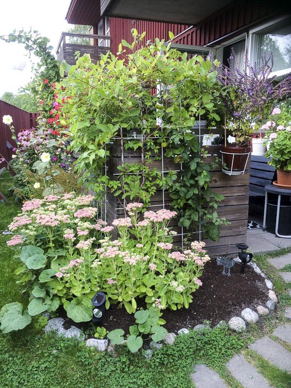 rabatt, garden, flowerbed
