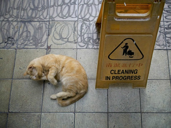 cat cleaning in progress