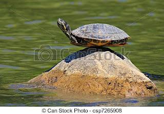 yoglili la tartaruga  simbologia di kurmasana