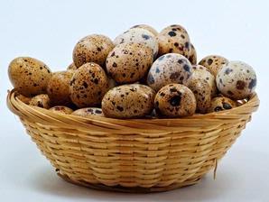 Mencegah telur puyuh untuk rentan busik itu perlu dilakukan upaya pengawetan.