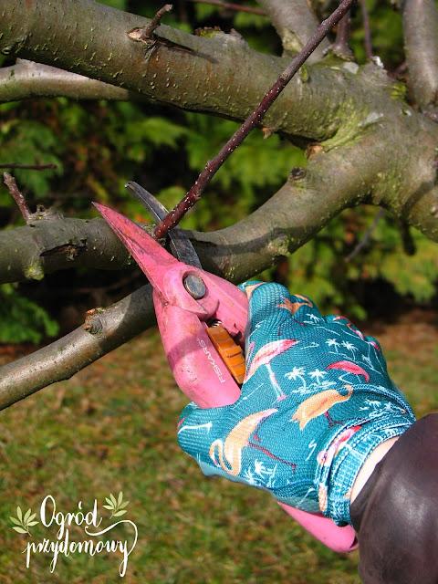 pierwsze prace ogrodowe, pierwsze prace w ogrodzie, ogród przydomowy