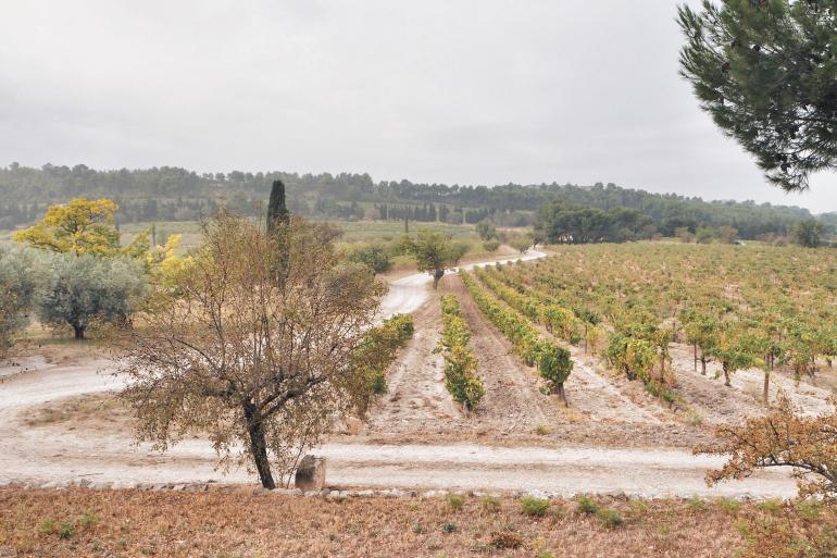 Mas de Gourgonnier - vignes de l'AOP des Baux de Provence