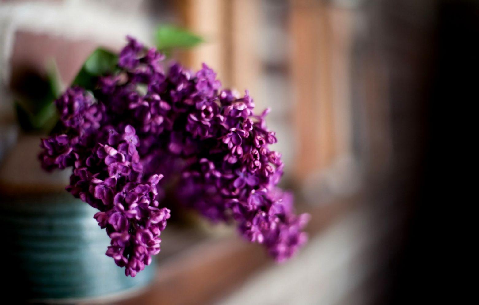 Close Up Flower Purple Macro Hd Wallpaper One Wallpapers
