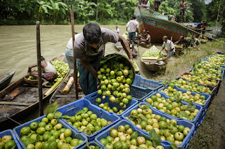 αγορά γκουάβα στο Μπαγκλαντές