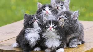 New Baby Cats Animal Hd Wallpaper18
