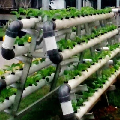 urban hidroponik, urban farming