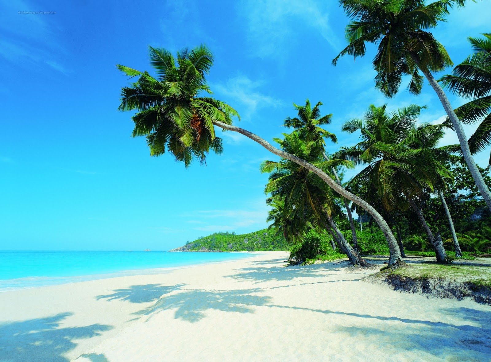 Tropics Palm Trees Sun Beach 4k Hd Desktop Wallpaper For: HD Wallpapers: Palm Tree Wallpapers Hd