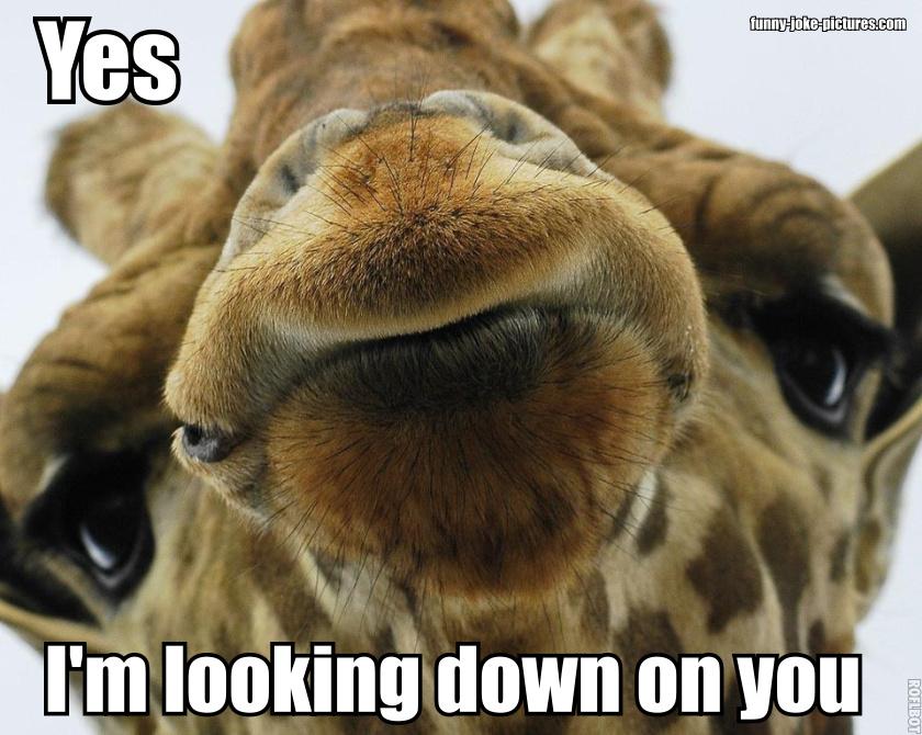Funny giraffe cartoon meme - photo#34